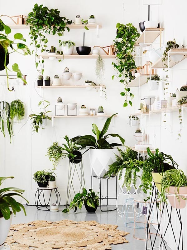 15 attractive indoor plants to easily green up your home